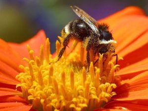 bee_pollen_flower